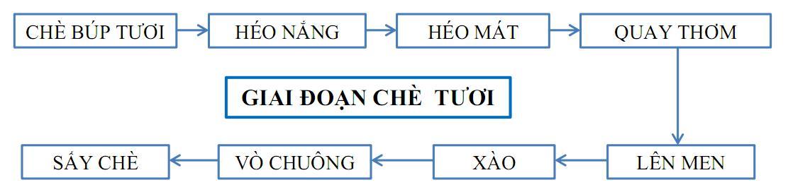 Sản xuất trà Ô Long giai đoạn chè tươi