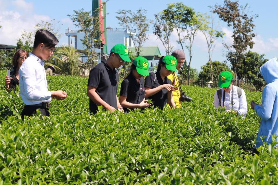 Kiểm tra chất lượng trà Ô Long trước khi mua