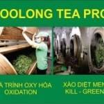 Quy trình sản xuất trà Long Đỉnh