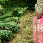 Trà Đài Loan