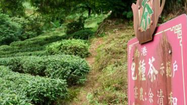 Tìm hiểu về trà Đài Loan