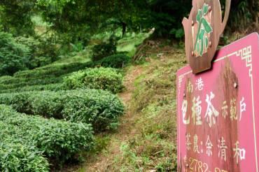 Trà Đài Loan có gì đặc biệt?