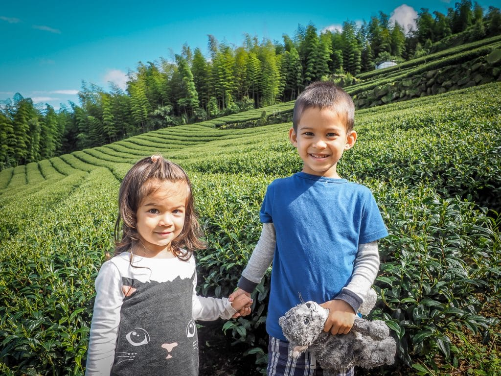 vuờn trà tuyệt đẹp ở Shizhuo