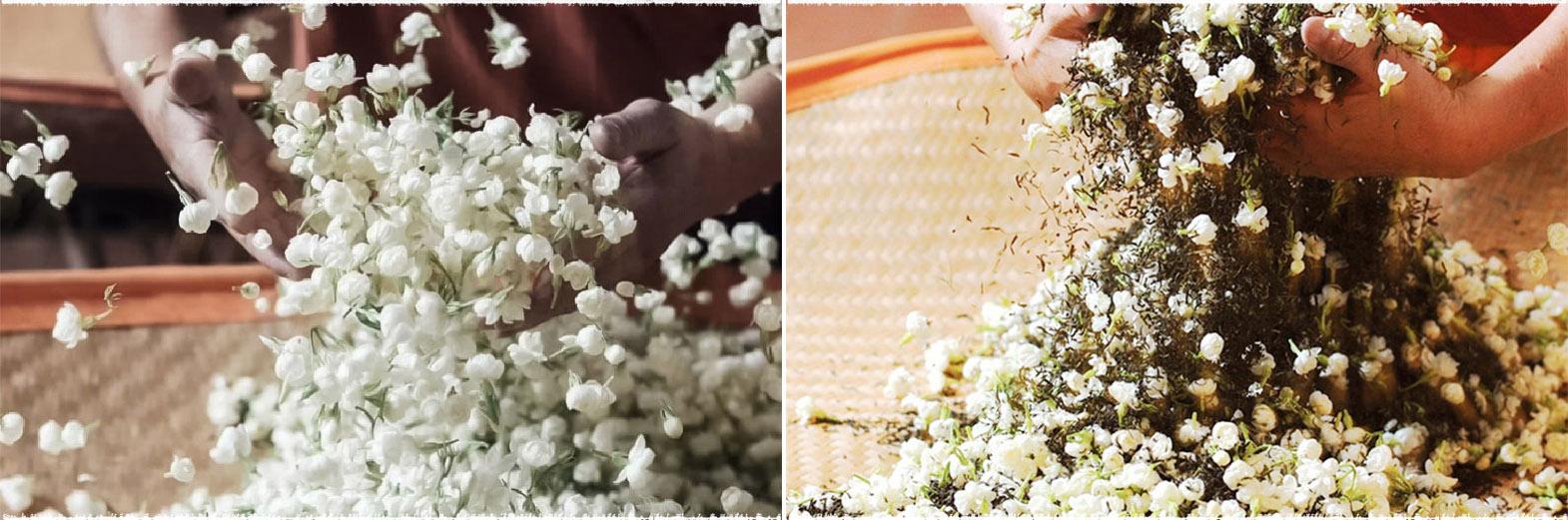 Ướp hoa cho trà